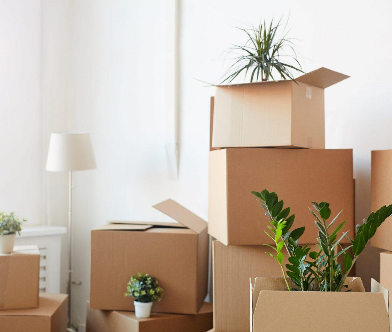 verhuizen-planen-dozen
